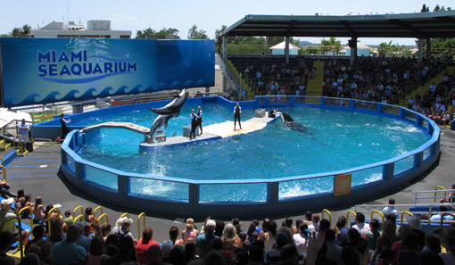 SHOW NO MIAMI AQUARIUM