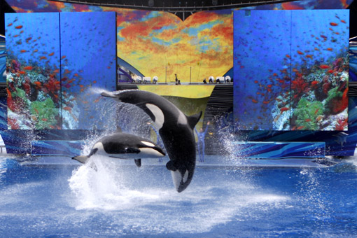 SHOW DA SHAMU NO SEA WORLD ORLANDO