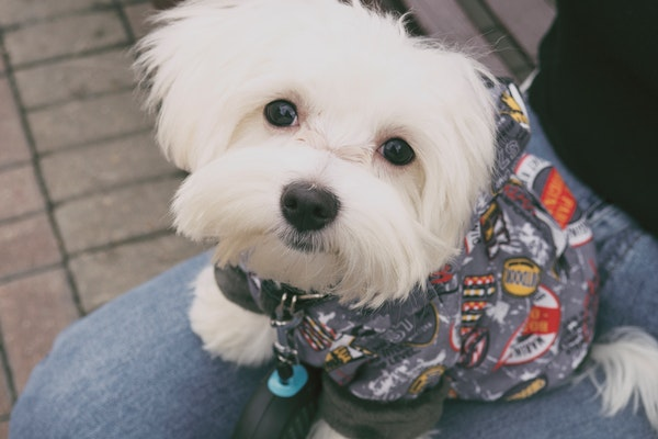 adorable animal breed 167085